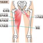 太ももの内側にある筋肉・内転筋を鍛えて脚痩せ!